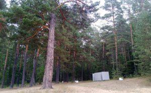 Раздевалка в сосновом лесу Бузим