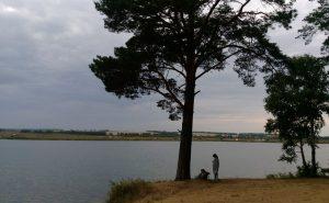 Сосна на озере Бузим